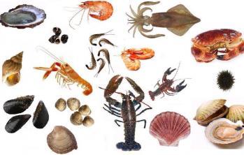 crustacés et mollusques